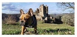 Dogs in holidays Auvergne