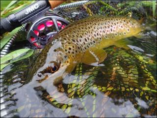 Reopening of river fishing