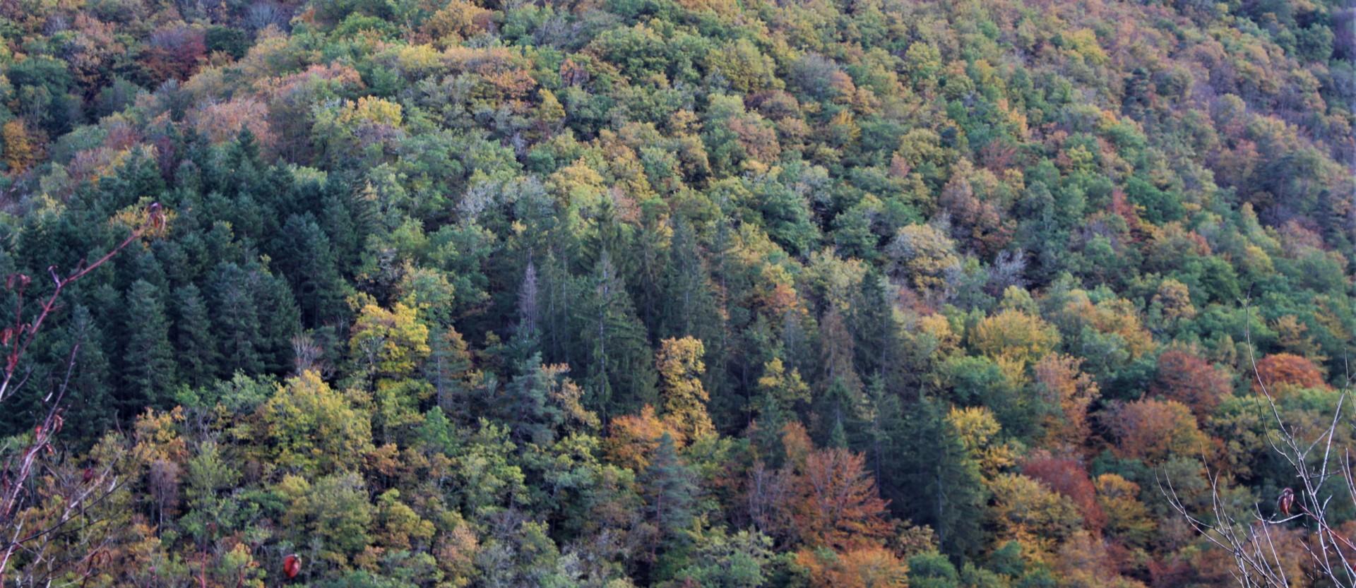Les Fades en automne : la forêt