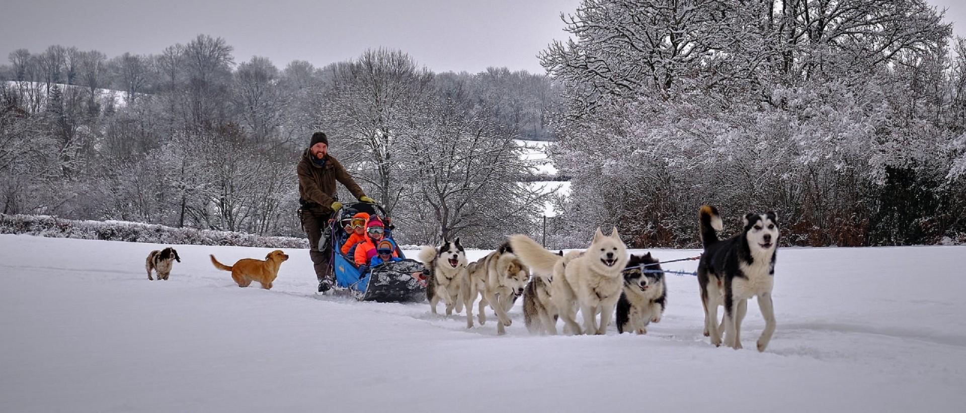 taiga-aventure chiens de traineau